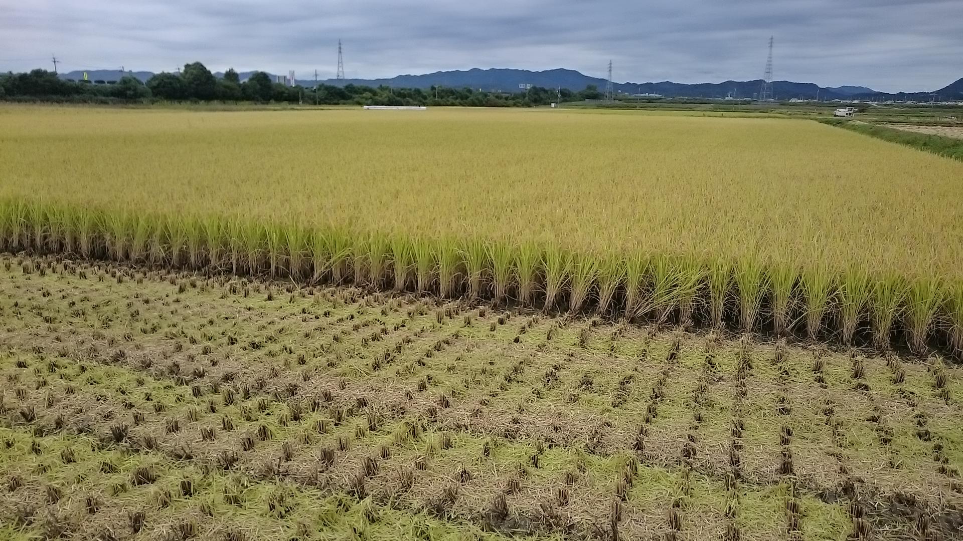 大工が作る米