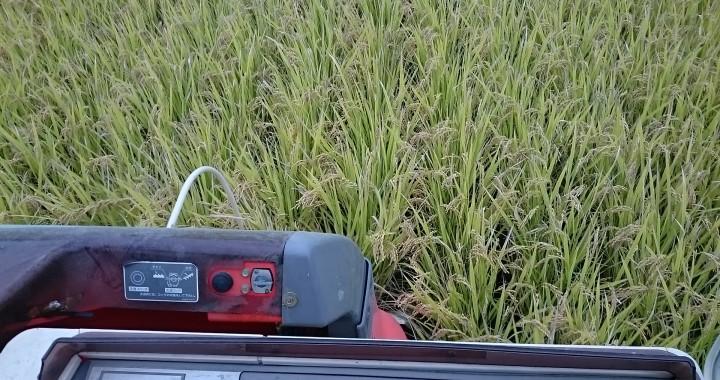 大工さんが作る米