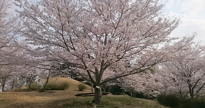 桜 伝統構法 石場建て